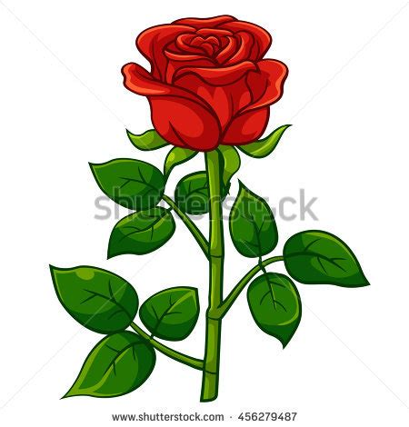 Different Kinds of Roses - Our Rose Garden - University of